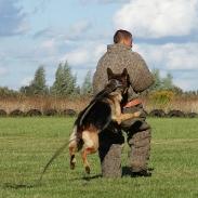 дрессировка собак в одессе