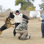Кубок «МГБ-Юг» по программе «Собака обеспечения общественной безопасности» (СООБ)