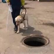 video: Ролик о собаках поводырях