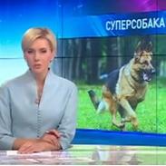 video: Репортаж о первом открытом чемпионате Украины по прикладной дрессировке